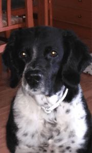 abogados-familia-madrid-mascotas-1
